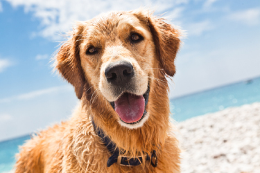 Veterinary Cardiology - Coast to Coast Cardiology - a